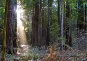 Rayas de sol bosque