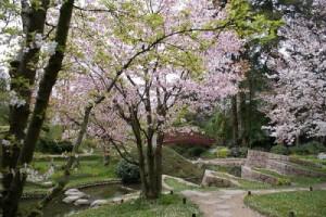 Jardín florecido